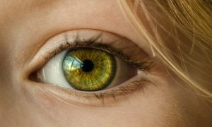 CBD and Glaucoma
